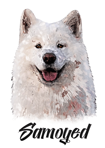Samoyed T-Shirt - Vivid Colors