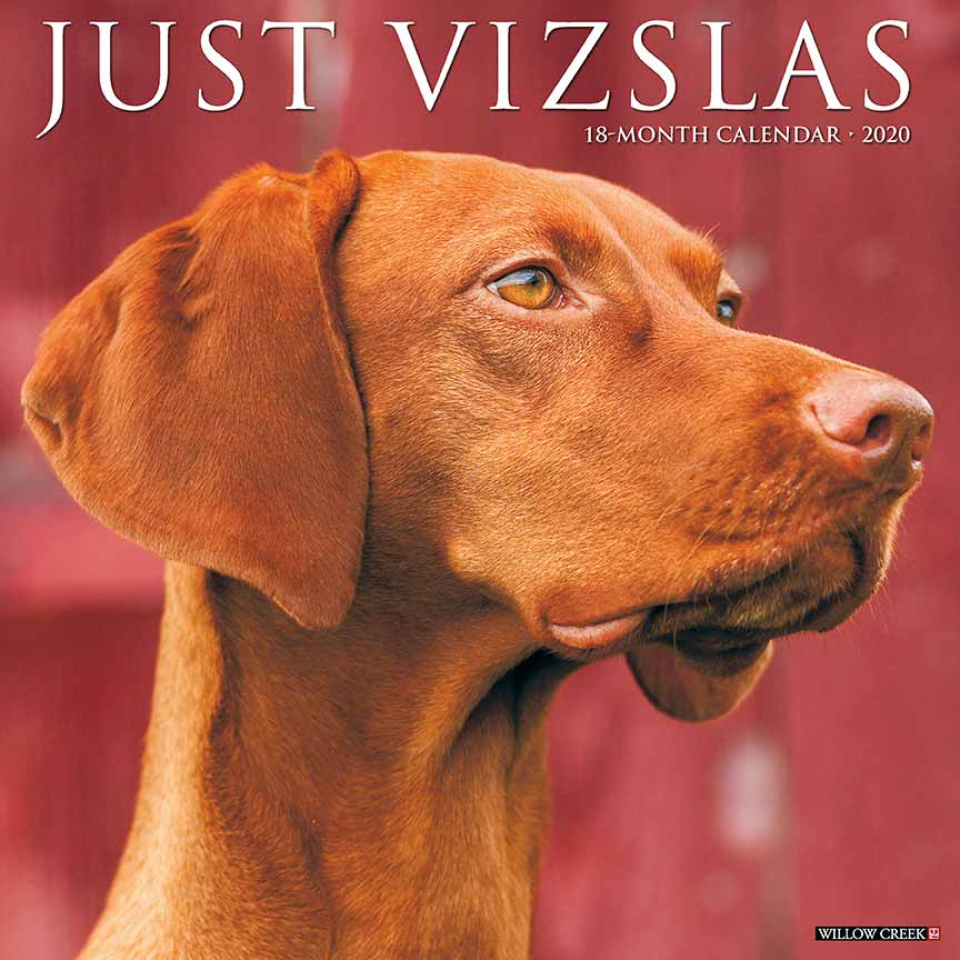 2020 Vizslas Calendar Willow Creek Press