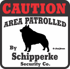Schipperke Bumper Sticker Caution