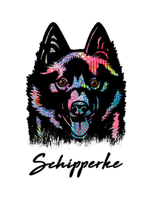 Schipperke T Shirt Colorful Abstract