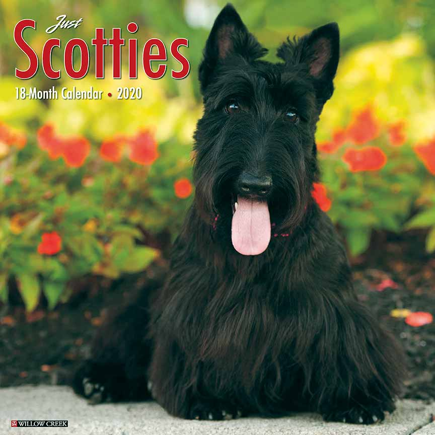 2020 Scotties Calendar