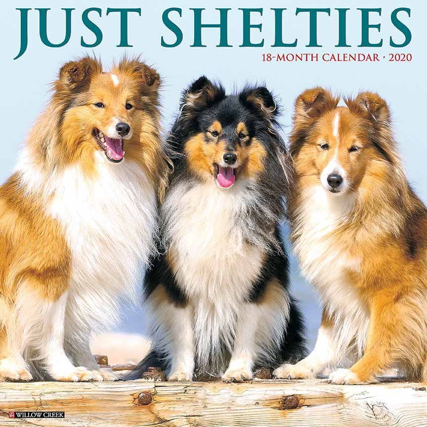 2020 Shelties Calendar Willow Creek Press