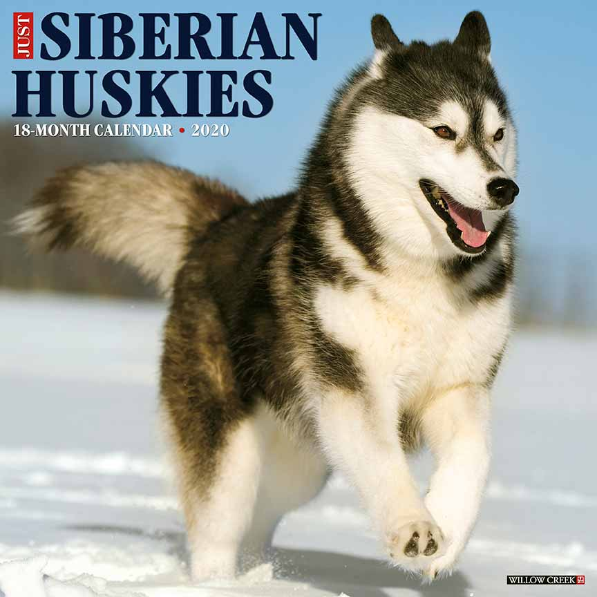 2020 Siberian Huskies Calendar Willow Creek