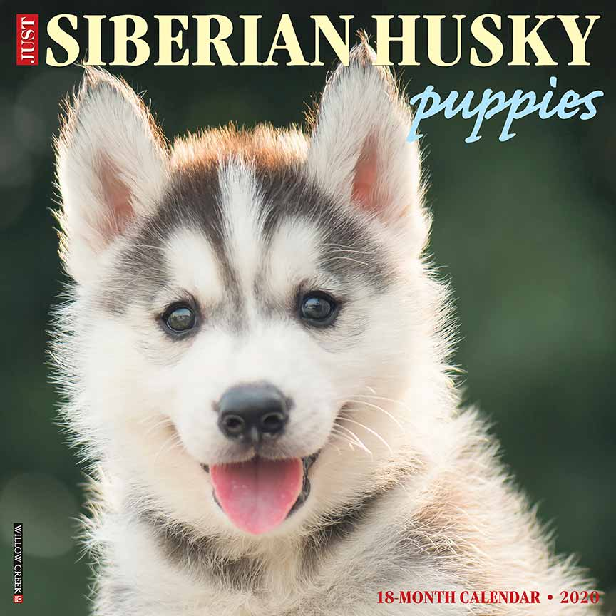 2020 Siberian Husky Puppies Calendar Willow Creek