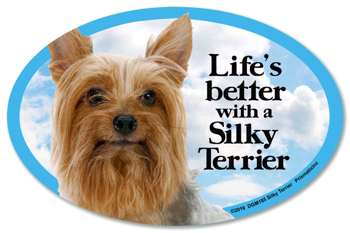 Silky Terrier Car Magnet - Life's Better
