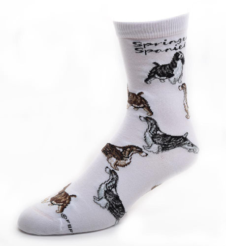 Springer Spaniel Socks Poses 2