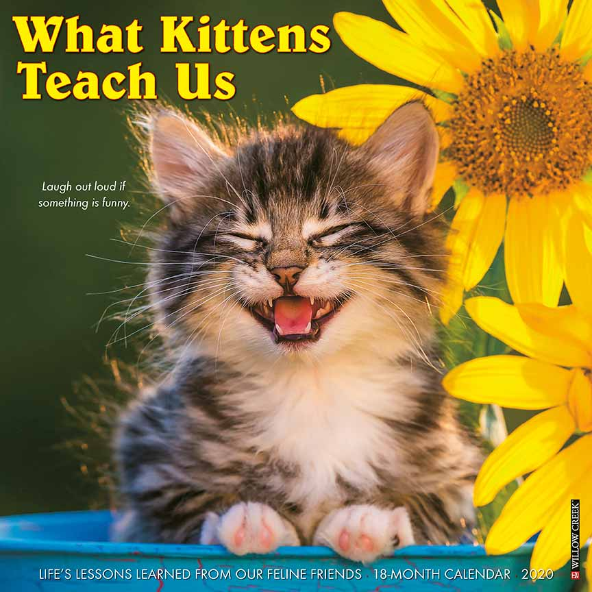 2020 What Kittens Teach Us Calendar Willow Creek