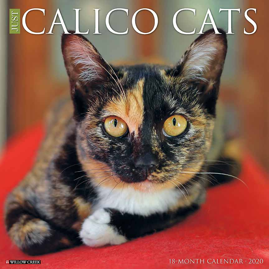 2020 Calico Cats Calendar Willow Creek