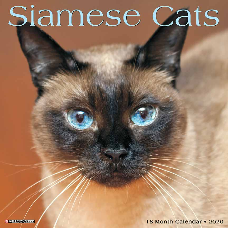 2020 Siamese Cats Calendar Willow Creek