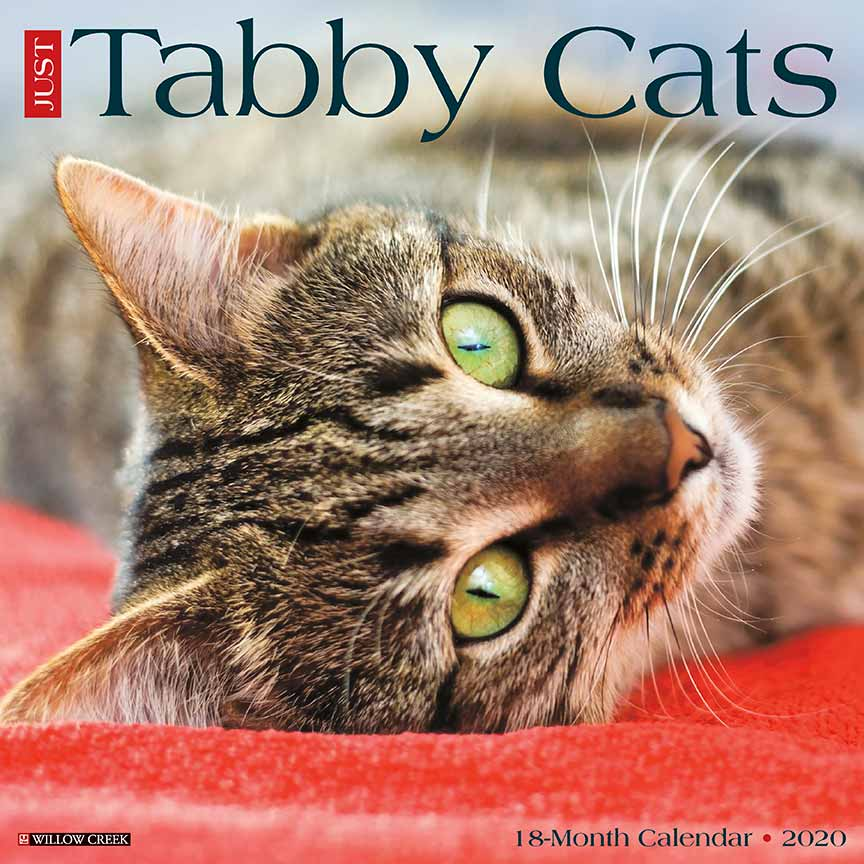 2020 Tabby Cats Calendar Willow Creek