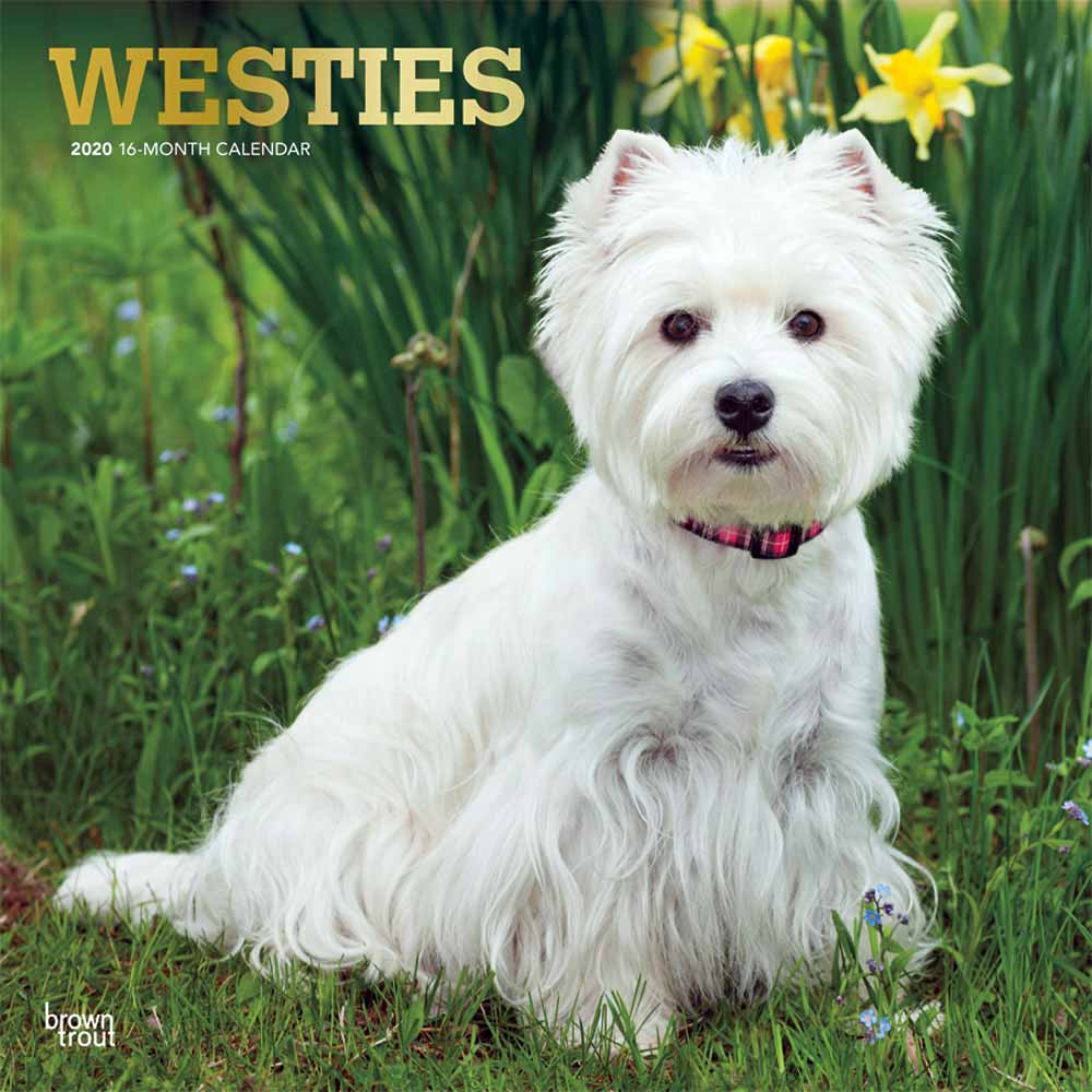 2020 West Highland White Terriers Calendar