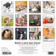 2020 Why Cats Do That Calendar Willow Creek