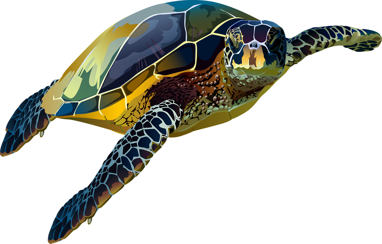 Sea Turtle T-Shirt - Vibrant Vector