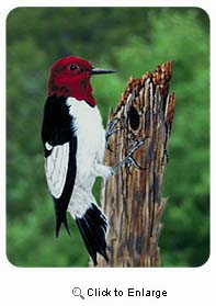 Woodpecker Coasters