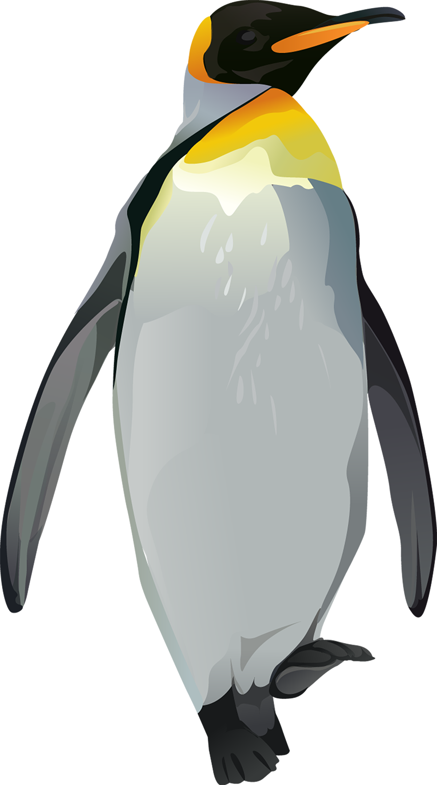Penguin T-Shirt - Vibrant Vector