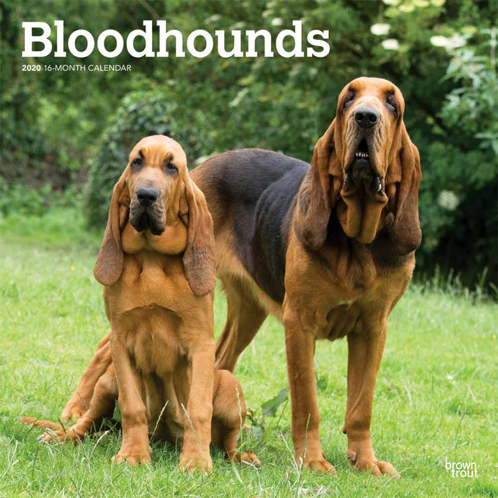 2020 Bloodhounds Calendar