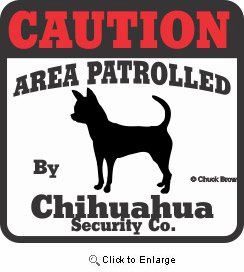 Chihuahua Bumper Sticker Caution