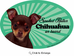 Chihuahua Car Magnet - Spoiled Rotten