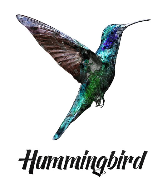 Hummingbird T-Shirt - Vivid Colors