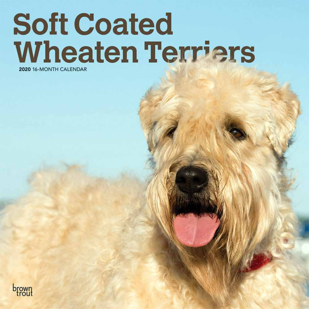 2020 Soft Coated Wheaten Terriers Calendar