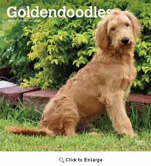 2020 Goldendoodle Calendar Brown Trout