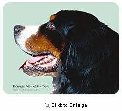 Bernese Mountain Dog Coasters