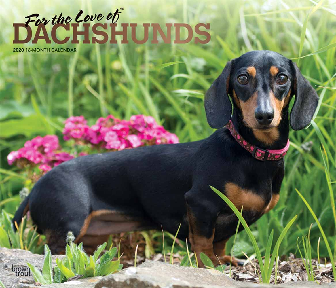 2020 For the Love of Dachshunds Deluxe Calendar