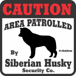 Siberian Husky Bumper Sticker Caution