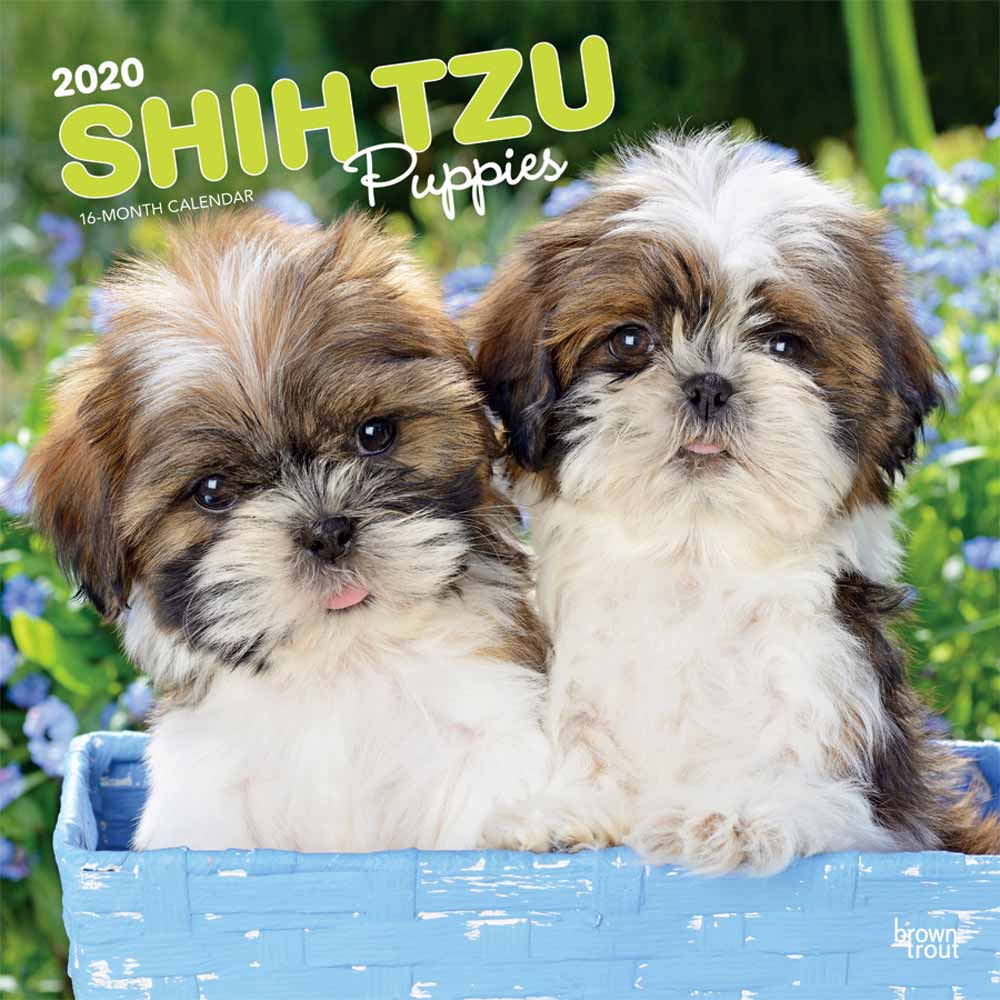2020 Shih Tzu Puppies Calendar