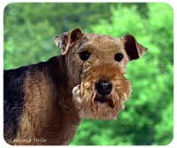 Lakeland Terrier Mousepad