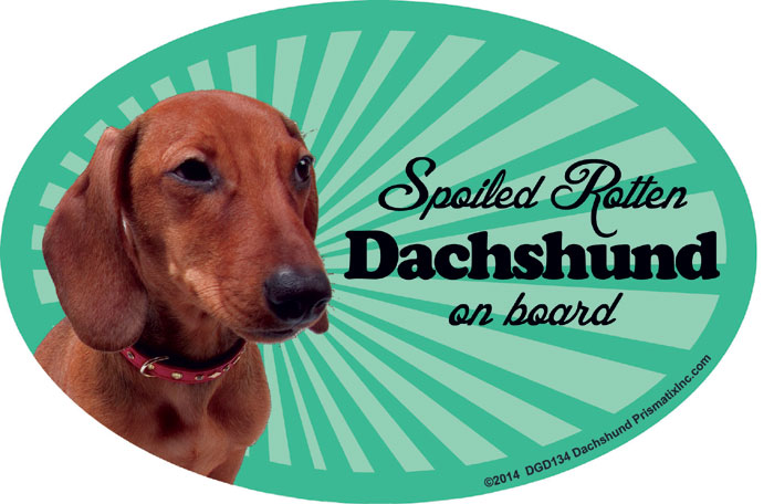 Dachshund Car Magnet - Spoiled Rotten