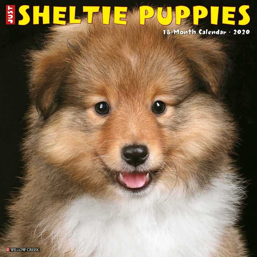 2020 Sheltie Puppies Calendar