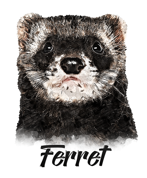 Ferret T-Shirt - Vivid Colors
