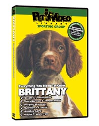 Brittany Video