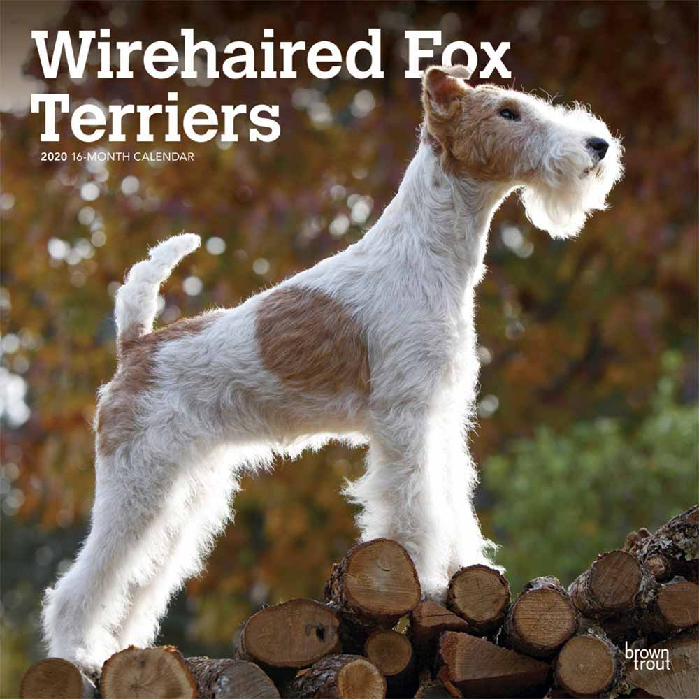 2020 Wire Fox Terriers Calendar