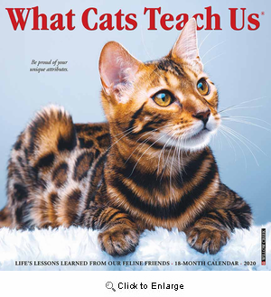 2020 What Cats Teach Us Calendar