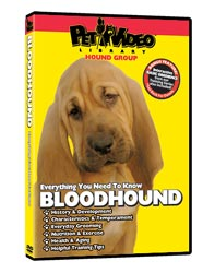 Bloodhound Video