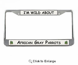 African Gray Parrot License Plate Frame