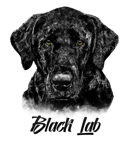 Black Lab T-Shirt - Vivid Colors