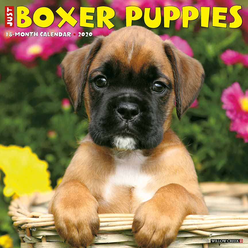 2020 Boxer Puppies Calendar Willow Creek