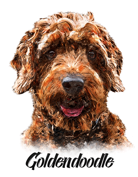 Goldendoodle T-Shirt - Vivid Colors