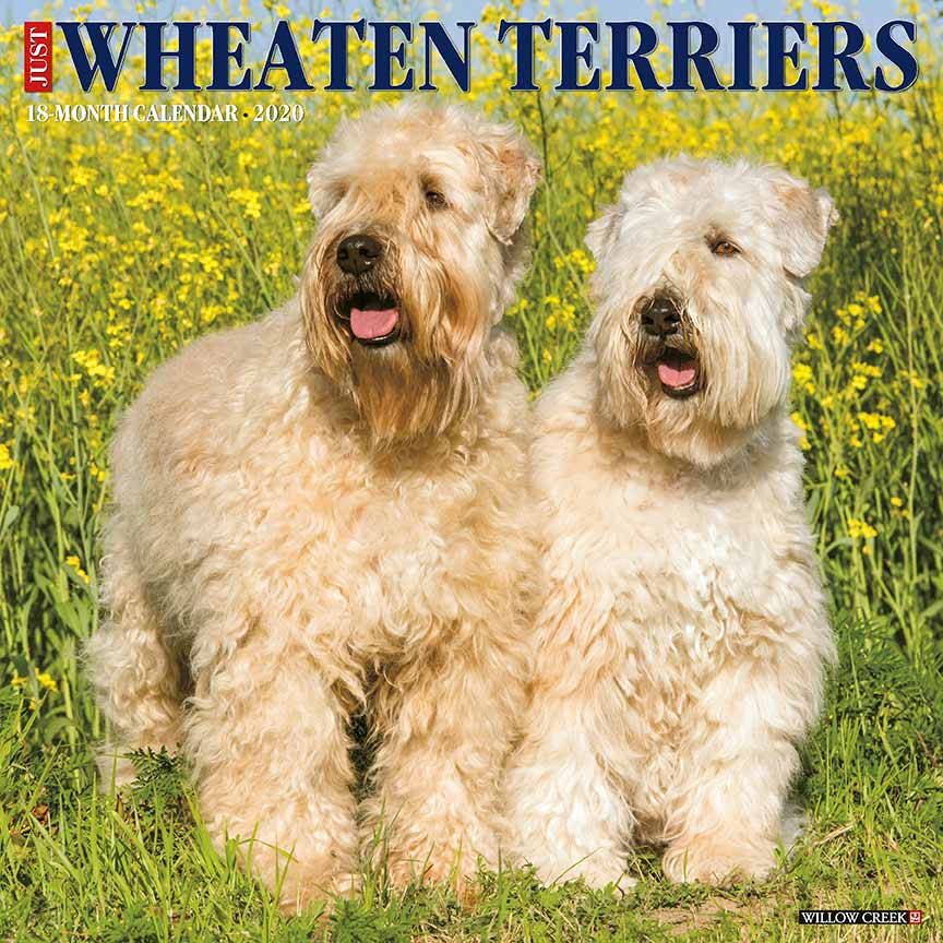 2020 Wheaten Terriers Calendar Willow Creek