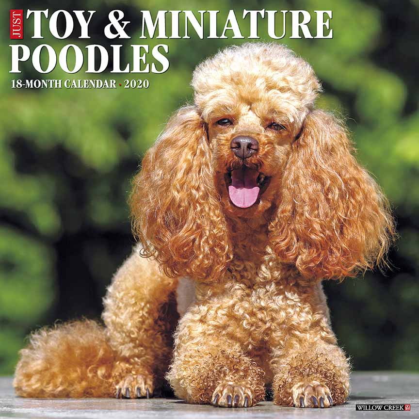 2020 Toy & Miniature Poodles Calendar Willow Creek