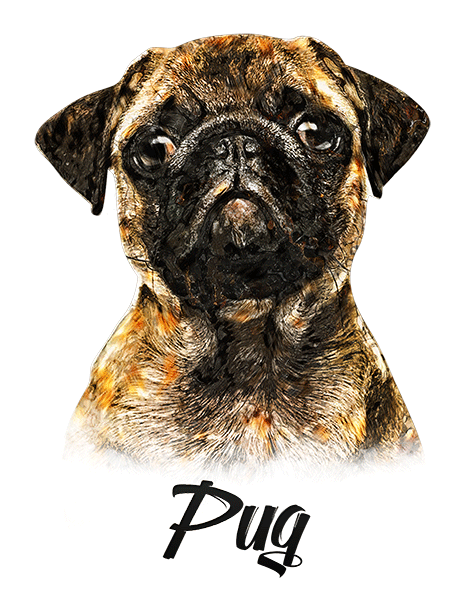 Pug Fawn T-Shirt - Vivid Colors