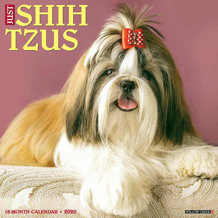 2020 Shih Tzus Calendar Willow Creek