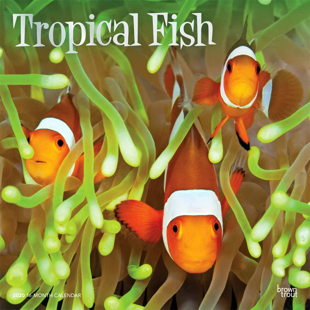 2020 Tropical Fish Calendar