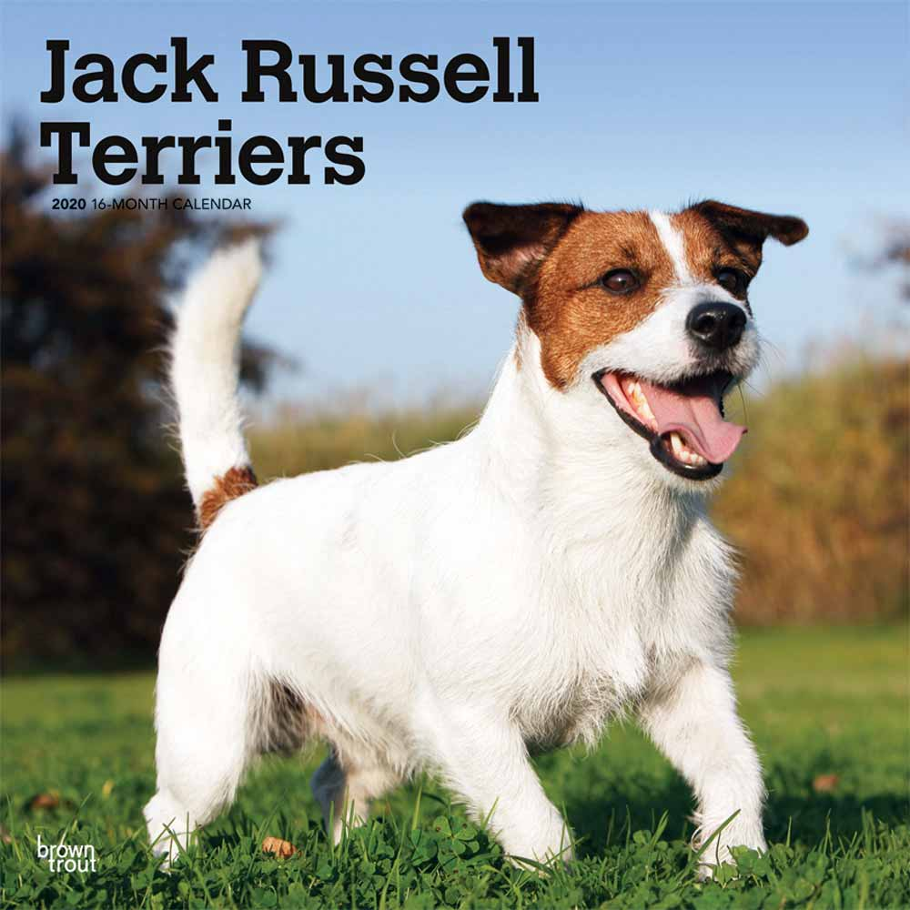 2020 Jack Russell Terriers Calendar Non Cropped