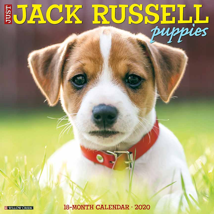 2020 Jack Russell Puppies Calendar Willow Creek
