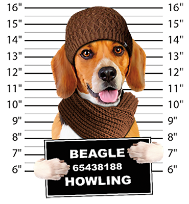 Beagle T-Shirt - Mug Shot
