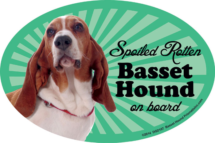 Basset Hound Car Magnet - Spoiled Rotten